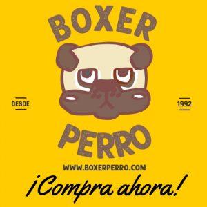 Comprar o adoptar un cachorro Boxer-4